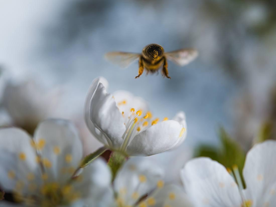 Bee freindly gardening