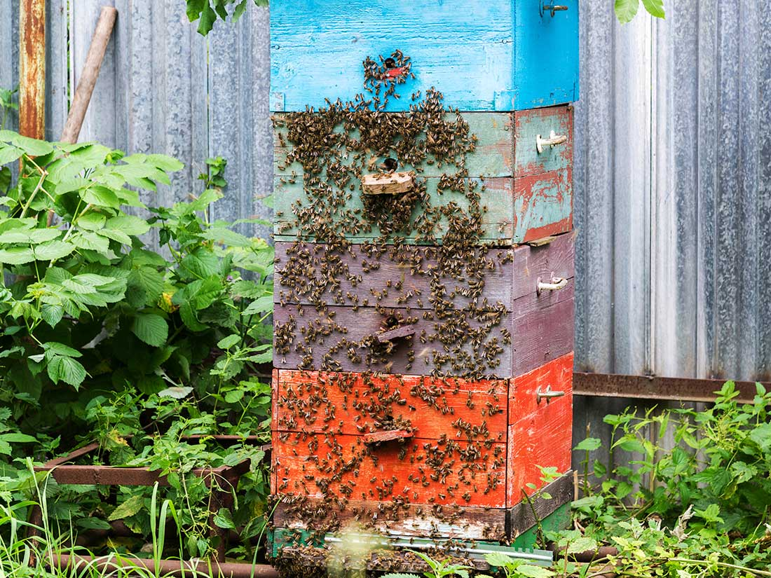 backyard-beekeeping