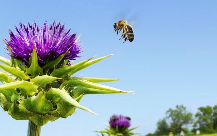 Bees pollinating plants