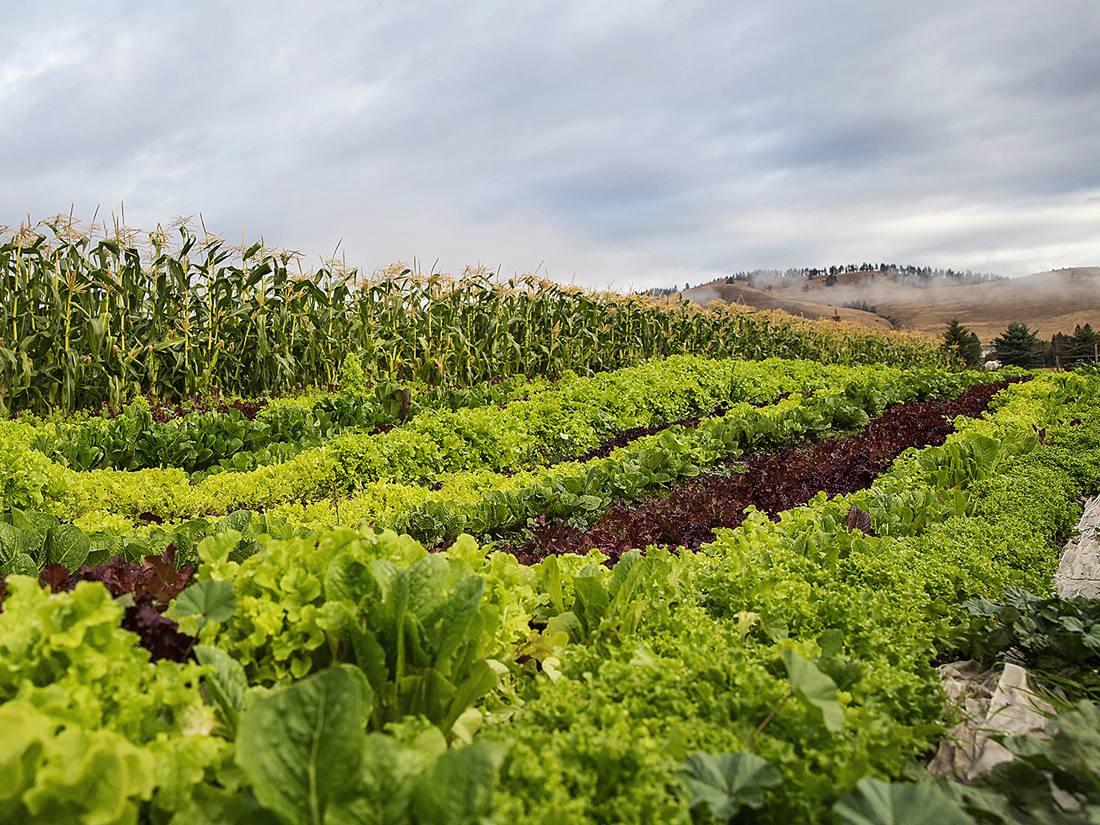 Fields, farm