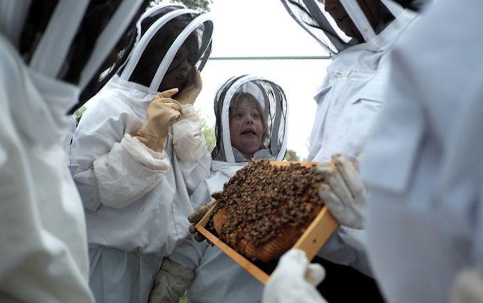 Beekeeping family