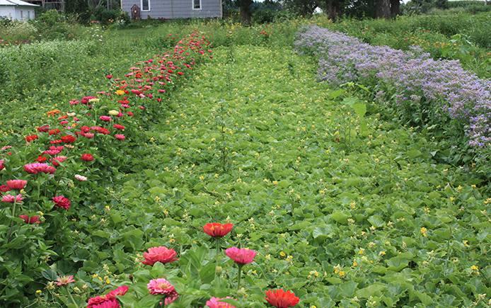 Farm rows