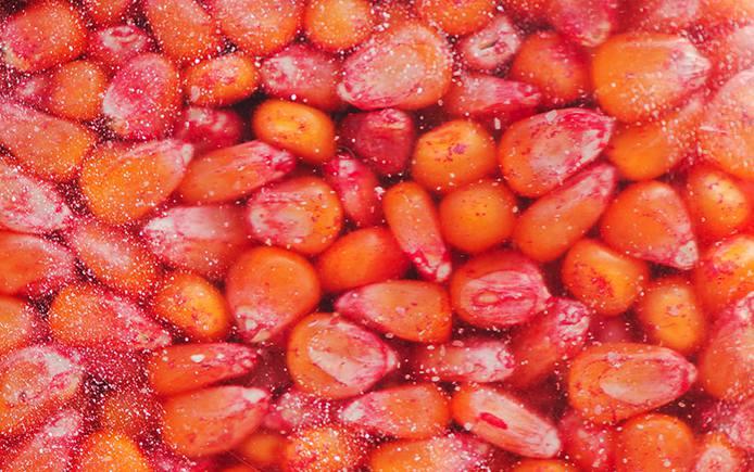 Treated Seeds