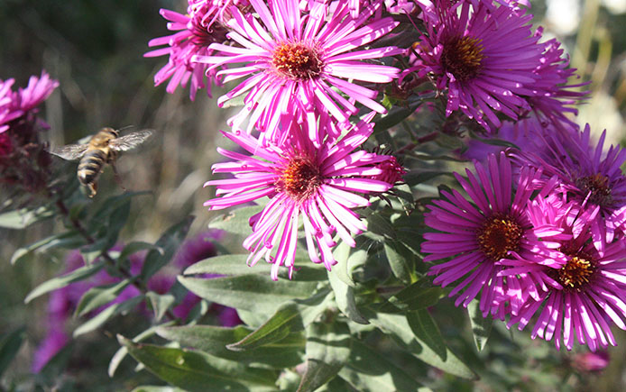Bee near flower pollinate